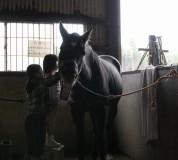お馬さんの欠伸